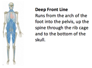 The Complexity of The Human Body 19