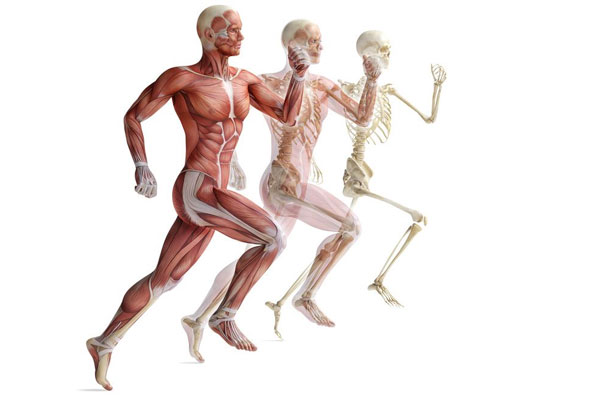 Complexity of The Human Body 2